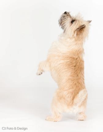 C3foto Thea danser