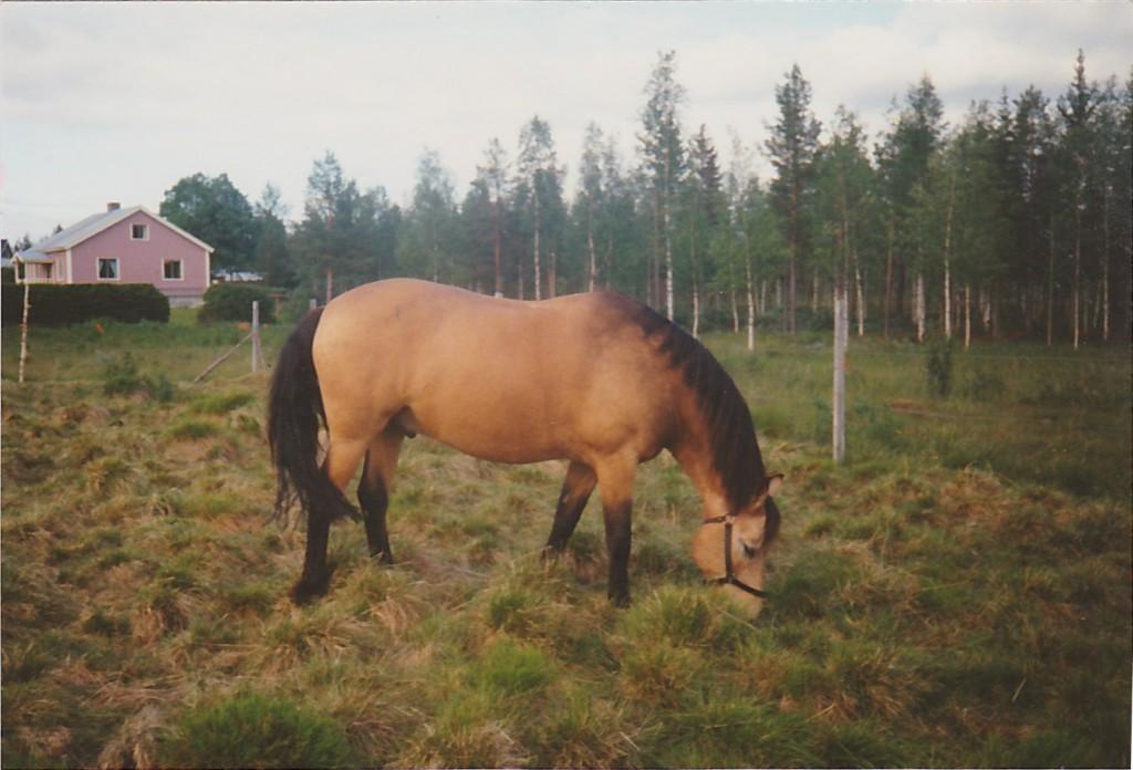 Janne_Serrejaur_1990