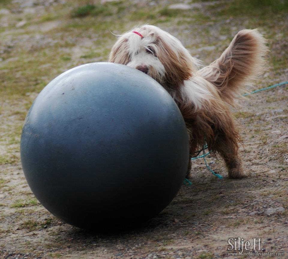 mino dytter ball