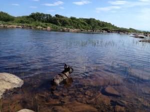 milo i vannet
