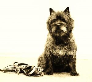 DogdiggersTone