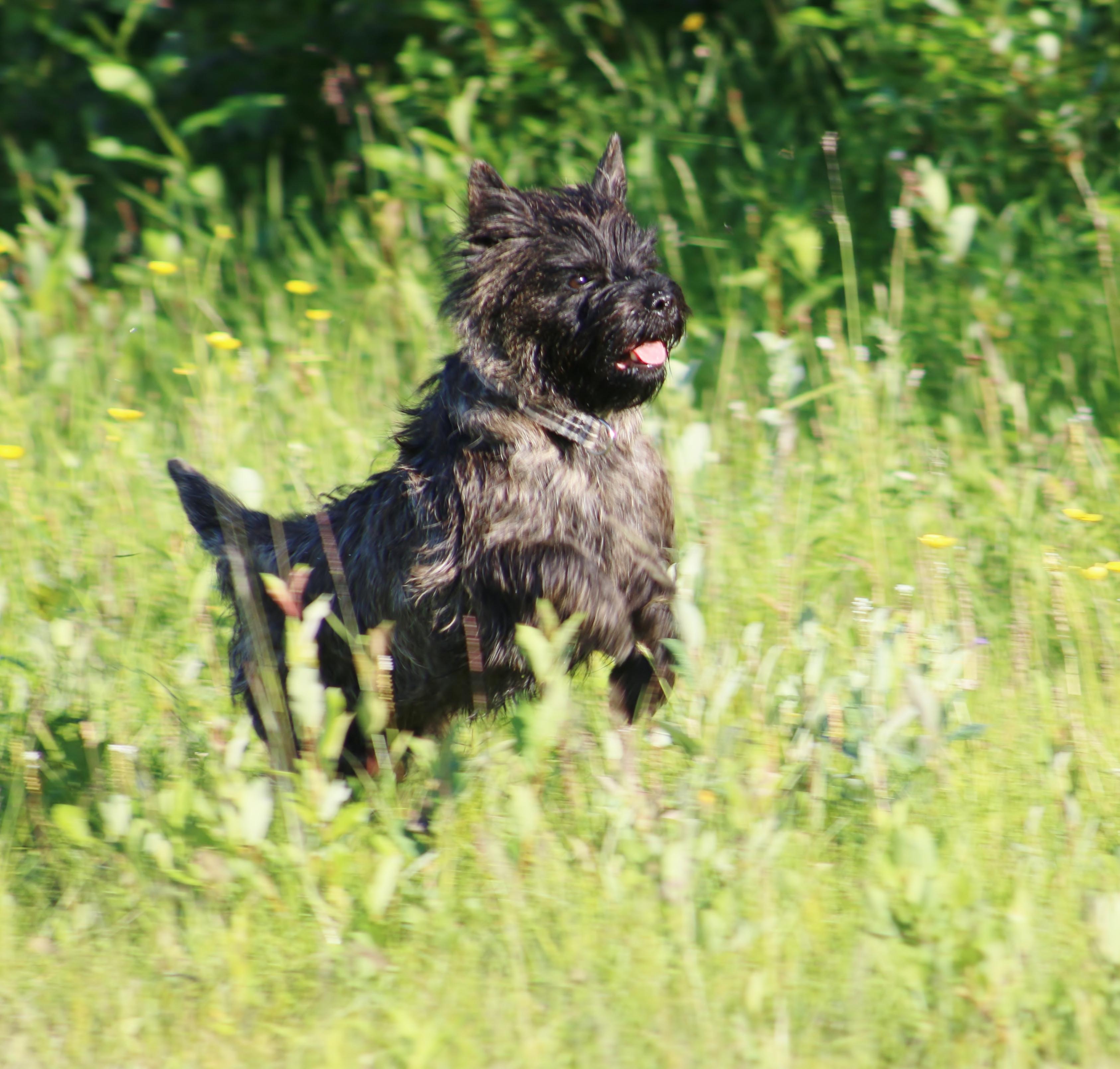 Ollie springer