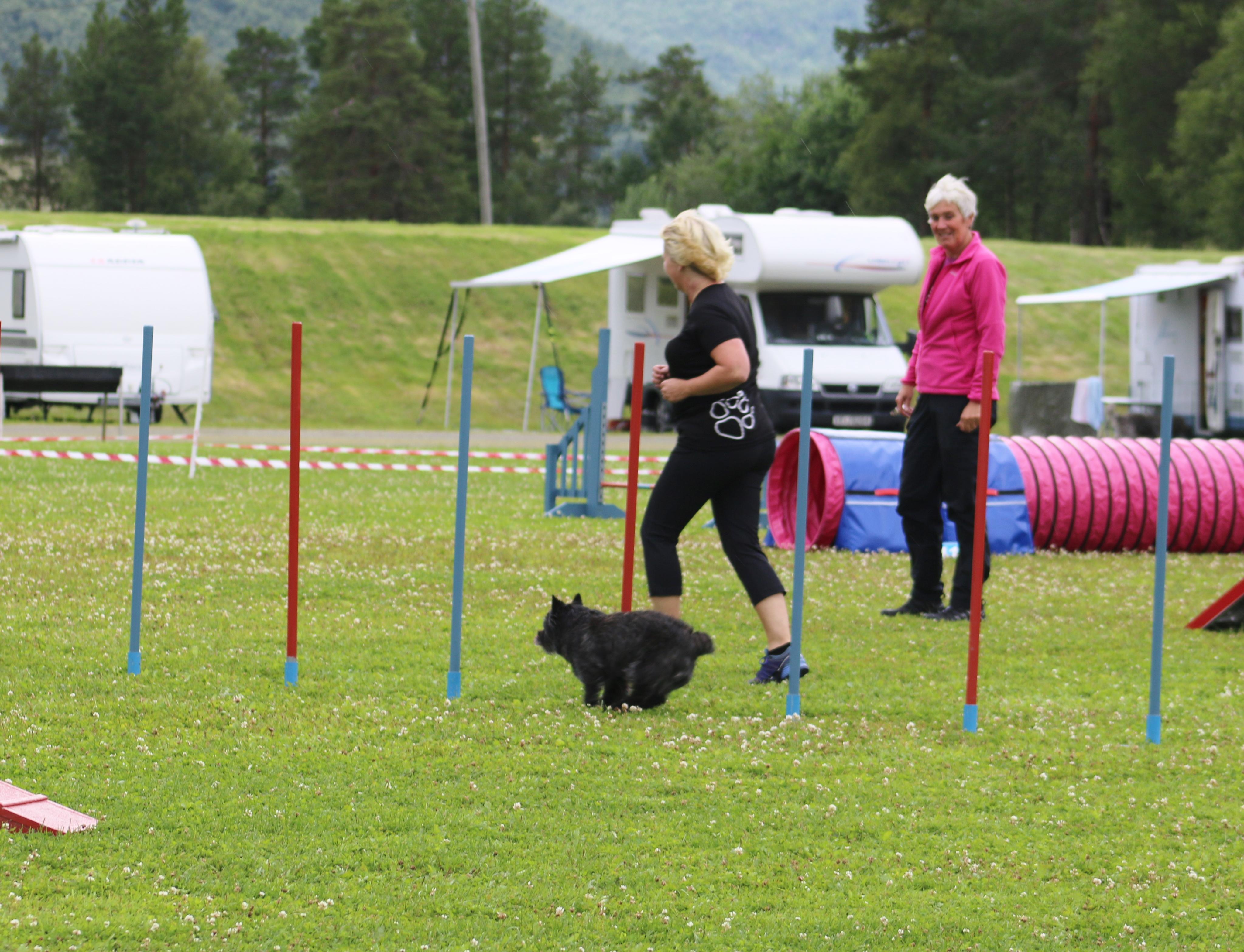 Pernille slalom Bardu hund stevne
