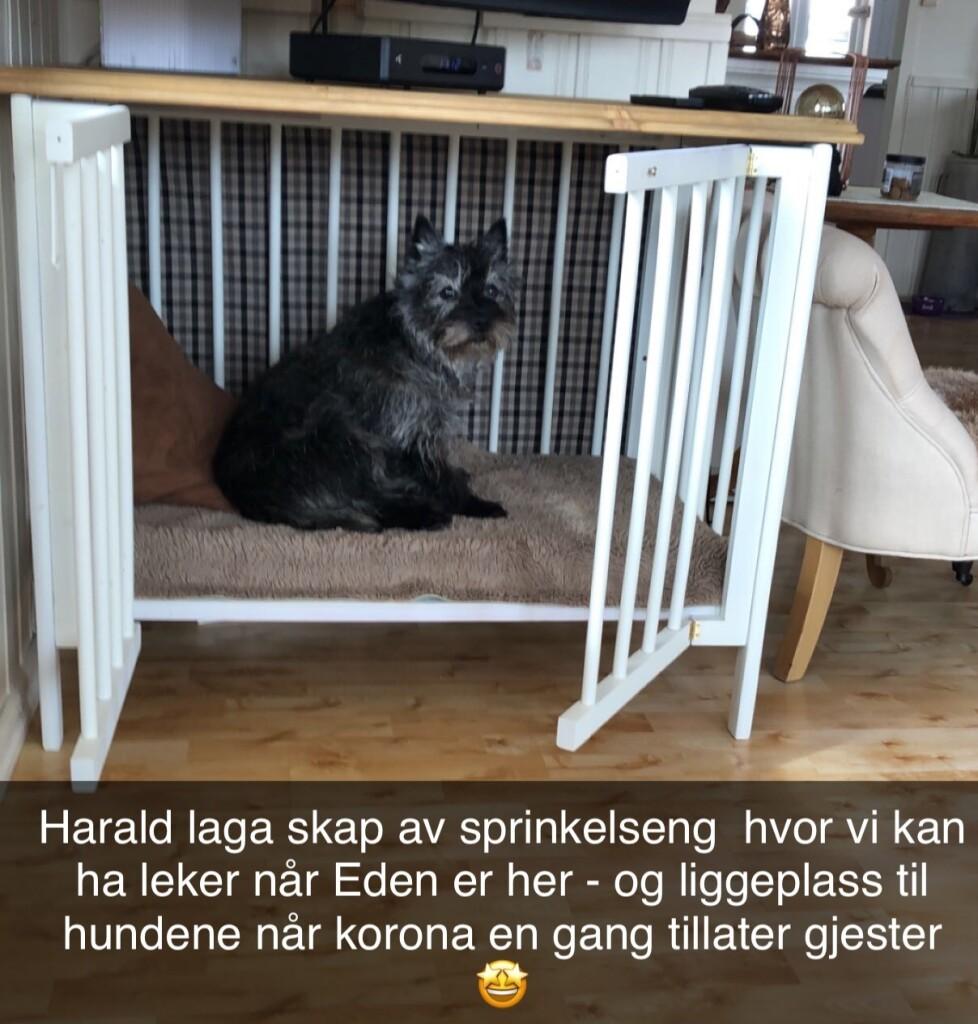 Hundeskap